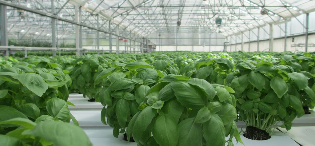 The growth of ground-source for the greenhouse industry